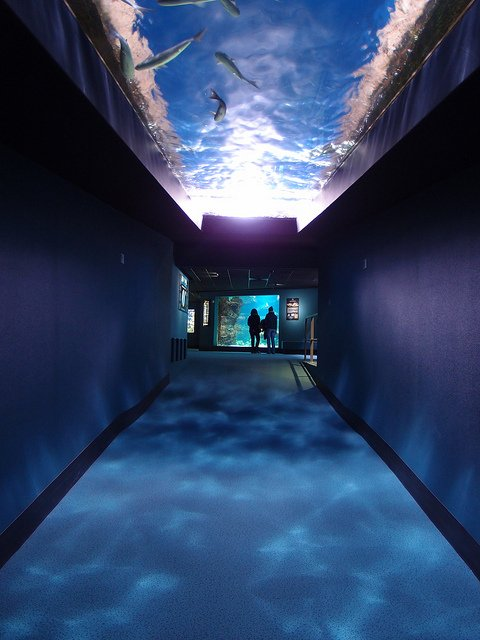Aquarium La Rochelle by: Guilhem Vellut (CC)