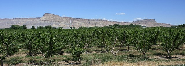 Grand Junction Wine Country by: David Herrera (CC)
