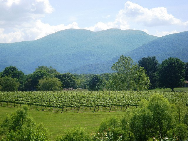 Blue Ridge vineyards by: Kate Webster (CC)