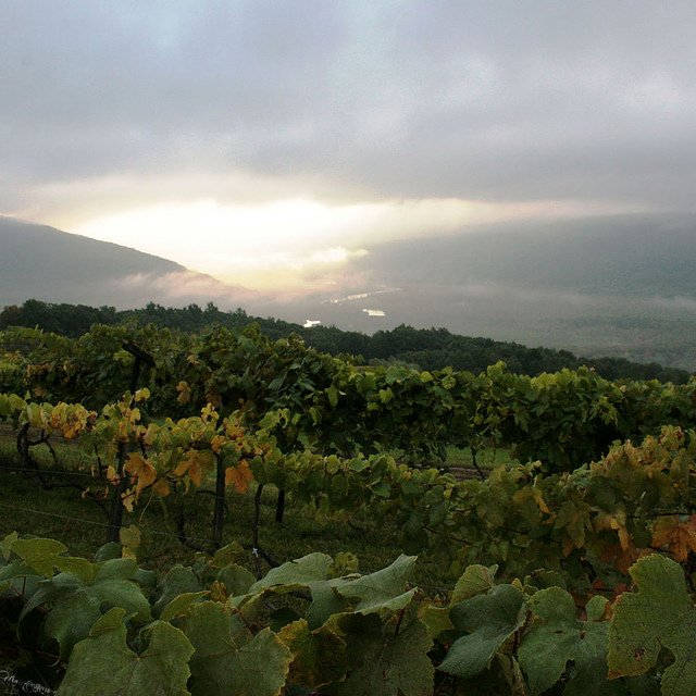 Finger Lakes vineyards at sunrise by: Visit Finger Lakes (CC)