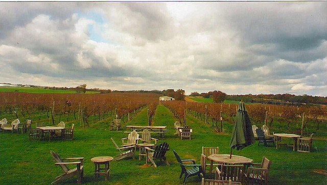 Long Island Wine Country by: Katherine Johnson (CC)