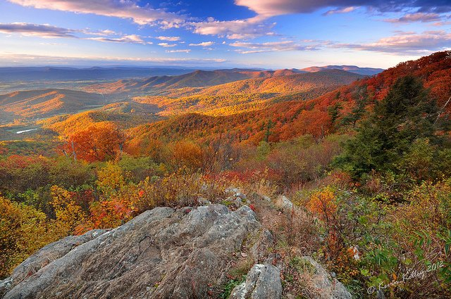 Plan a trip to Shenandoah National Park in the autumn.
