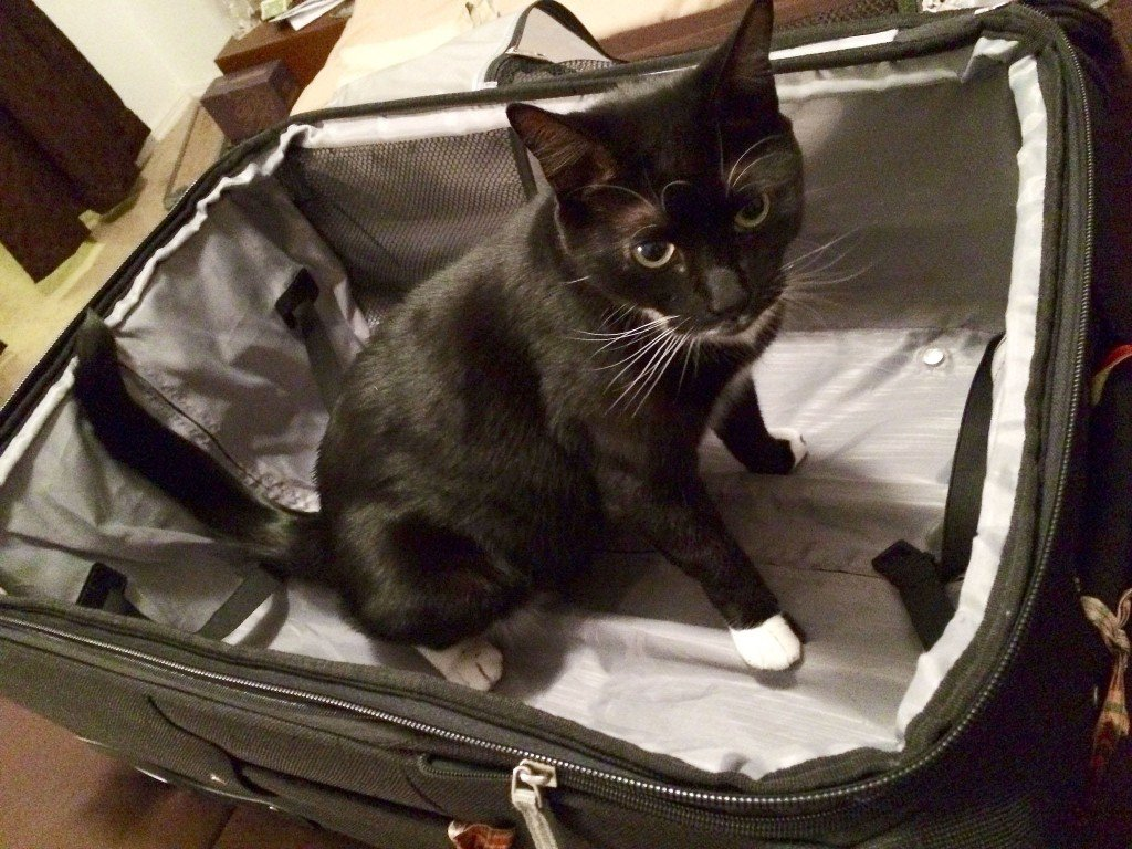 Cat in the suitcase by: Sam Howzit (CC)