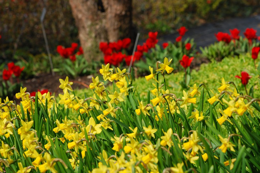 Swiss colors at Zurich Botanical Gardens by: Sudhanwa (CC)