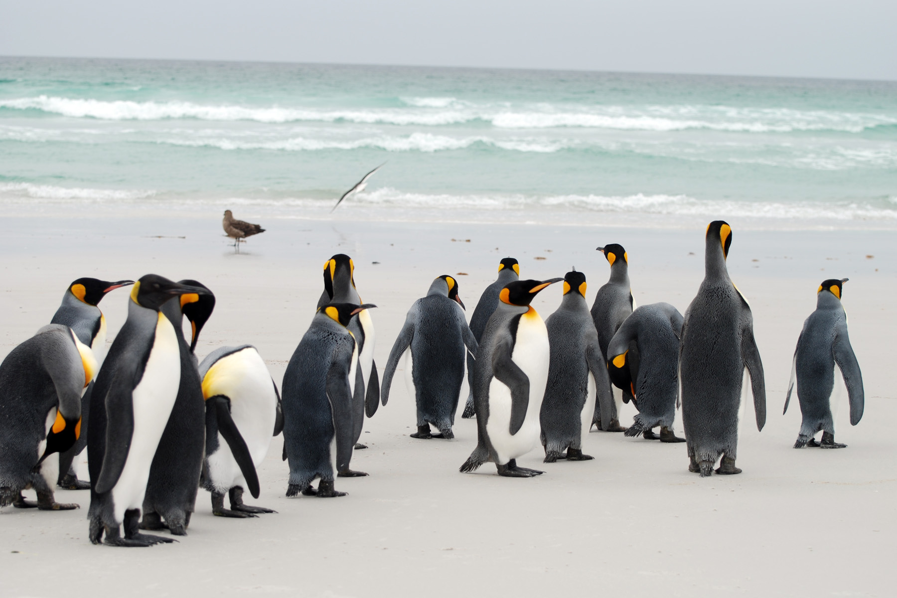 Volunteer Point, Falkland Islands by Don Faulkner (CC)