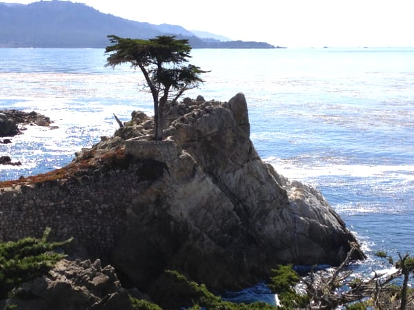 Plan A Roadtrip On California Pacific Coast Highway, Lone Cypress, 17-Mile Drive, Pebble Beach